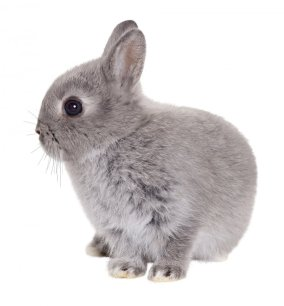 Master_Junior_Rabbit_Grey_2